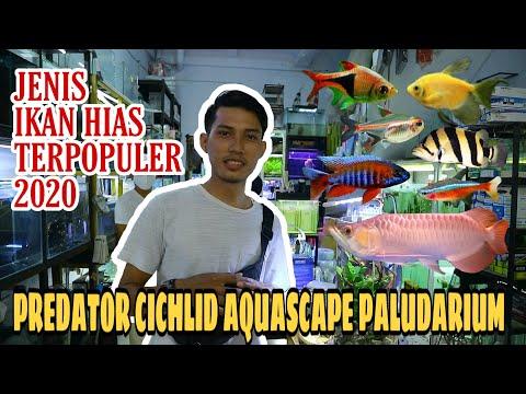 jenis-ikan-hias-terpopuler-2020-|-predator-,-cichlid-,-aquascape-&-paludarium