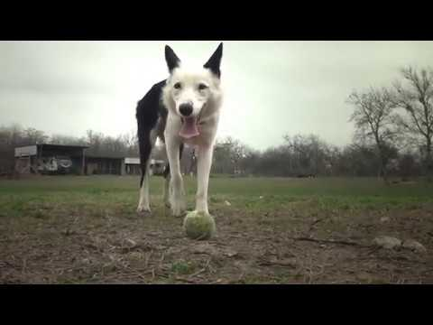 Gods Dogs Rescue: Our Story