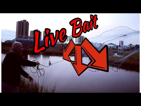 Catching Your Own Live Bait - Equipment And Location #gulfshoresalabama