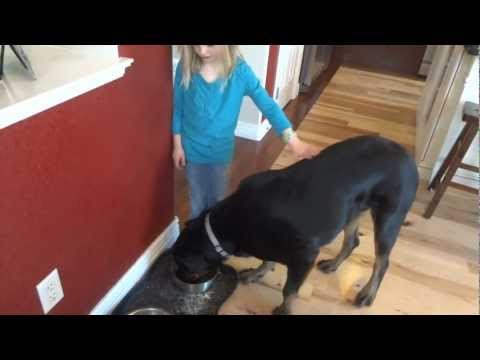 Rottweiler Food Aggression Fixed