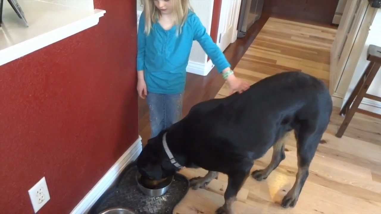 Rottweiler Food Aggression Fixed Youtube