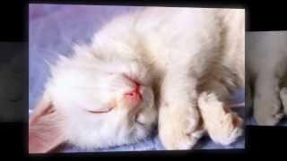 Беленький Котёнок!