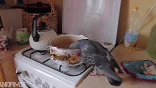 Как наглый голубь отжал у меня гречку. Супер прикол!!! The brazen dove, joke!!!