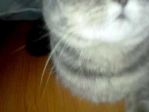 Самая дорогая кошка