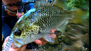 Jungle Perch Fishing in Untouched Water 2