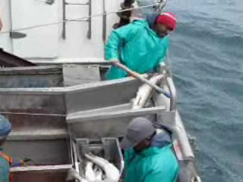 Longline Hake Fishing Offshore South Africa