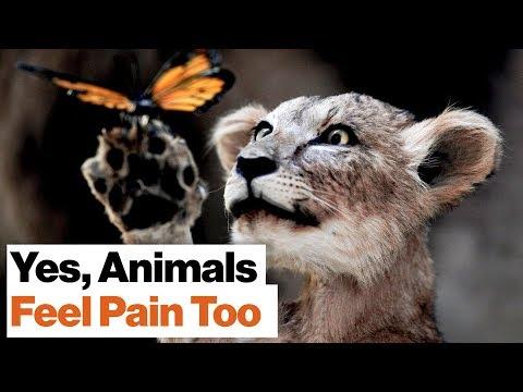 Richard Dawkins: No Civilized Person Accepts Slavery, So Why Do We Accept Animal Cruelty?