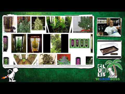 #1 Failure When Growing Cannabis  Buy This Equipment