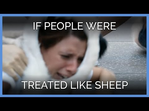 If People Were Treated Like Sheep