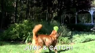 JW Classic Dog Toys