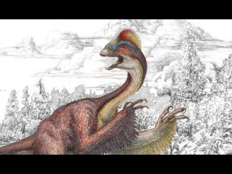 The 'Chicken from Hell' Fowl-Looking Dinosaur