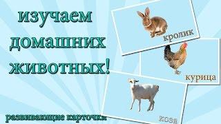 Учим животных - тематические карточки для  изучения животных