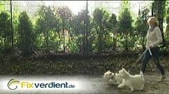 Nebenjob Dogsitter - Geld verdienen mit Hundebetreuung