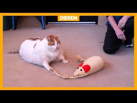 Bijna de helft van alle huisdieren in Nederland is te dik