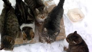 кормление стада котов
