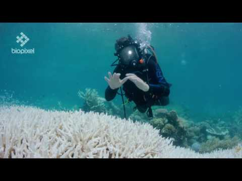 Richard Fitzpatrick talks about the current coral bleaching event