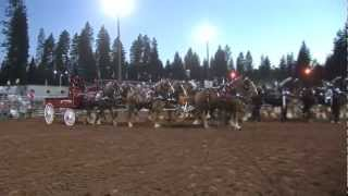 Draft Horse Classic - Nevada County Fairgrounds, Grass Valley, California