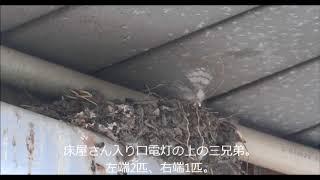 2018-08-03高井戸・富士見ヶ丘。 ・富士見ヶ丘の酒処のヒナ~4匹孵化した...