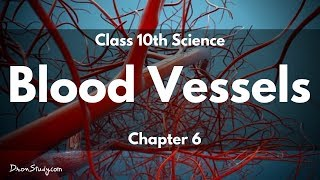 Blood Vessels- Life Processes 2 Class 10 Science I Class X Science