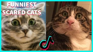 FUNNIEST SCARED CATS COMPILATION