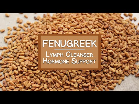 Fenugreek Seeds and Sprouts, A Lymph Cleanser and Hormone Bo