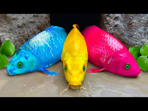 Pink Fish Funny Hunting Colorful eel, Rainbow Snake – 스톱모션 요리 Primitive Cooking ASMR