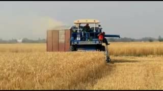 Samrat510 straw combine (multi crop)