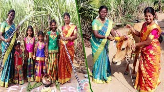 Pongal Celebration in Foodies Food Divya And Revathi Family in Village pongal || Pongal Special