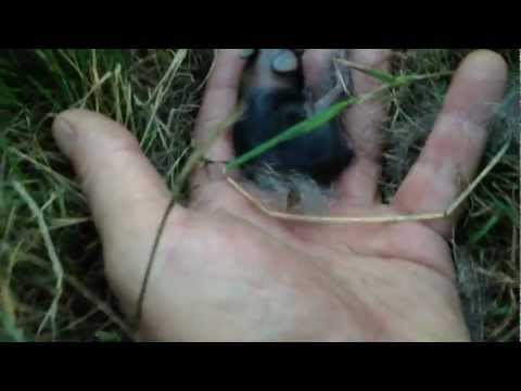 Super Hidden Tiny Wild Newborn Baby Bunnies -- Happy Fun Stupid Family Time!