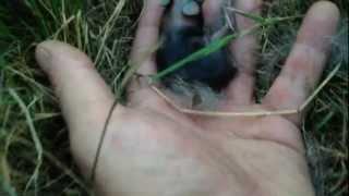 super hidden tiny wild newborn baby bunnies happy fun stupid family time