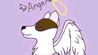 Rip Angel //  что случилось на самом деле???
