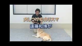犬を可愛い芸のできる人気者にする方法⇒ http://bit.ly/24B4ziN テレビ...