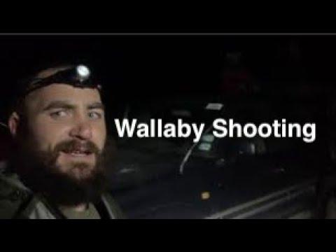 Wallaby Spotlight Shooting