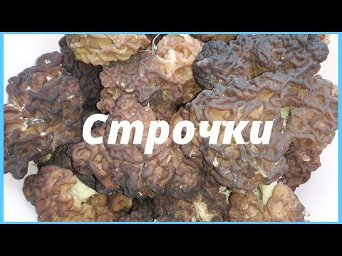 Первые весенние грибы