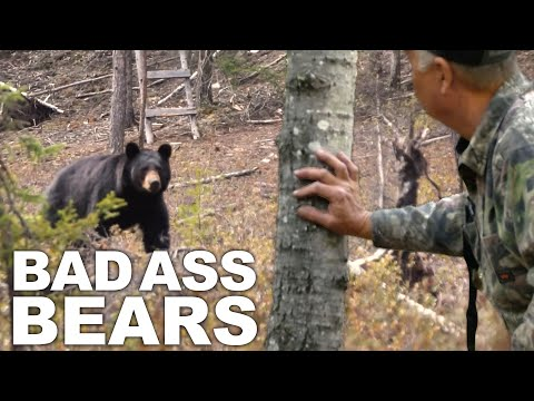 Best of Bear Hunting Compilation!