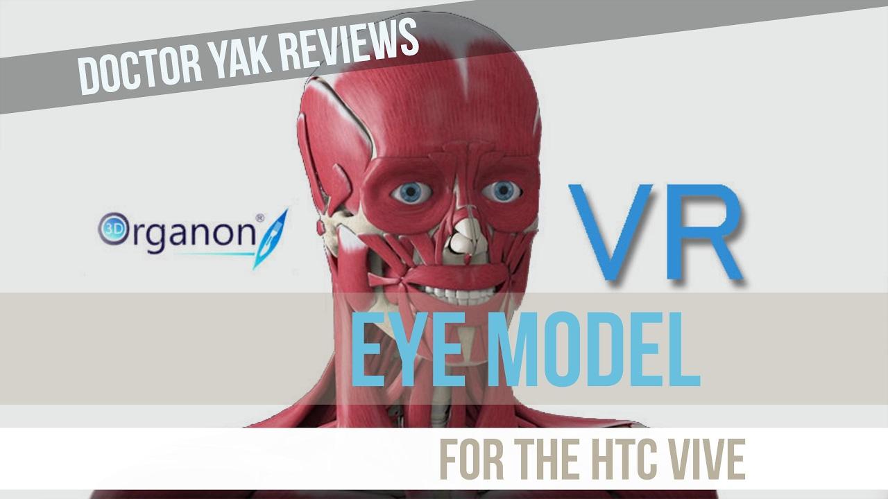 3D Organon VR Anatomy - Eye Model for the HTC Vive: Doctor Yak - YouTube