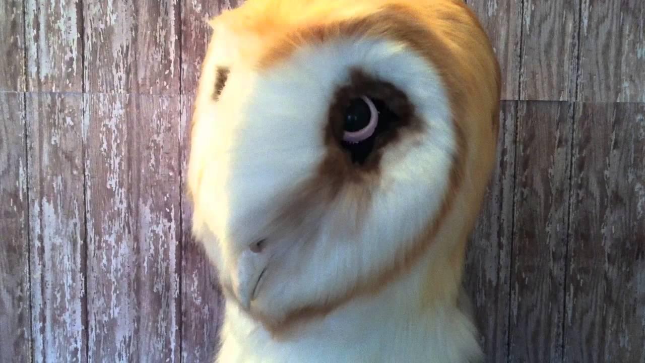 Barn Owl Fursuit Head - YouTube