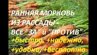 Морковь из рассады. Плюсы и минусы. Сибирская дача