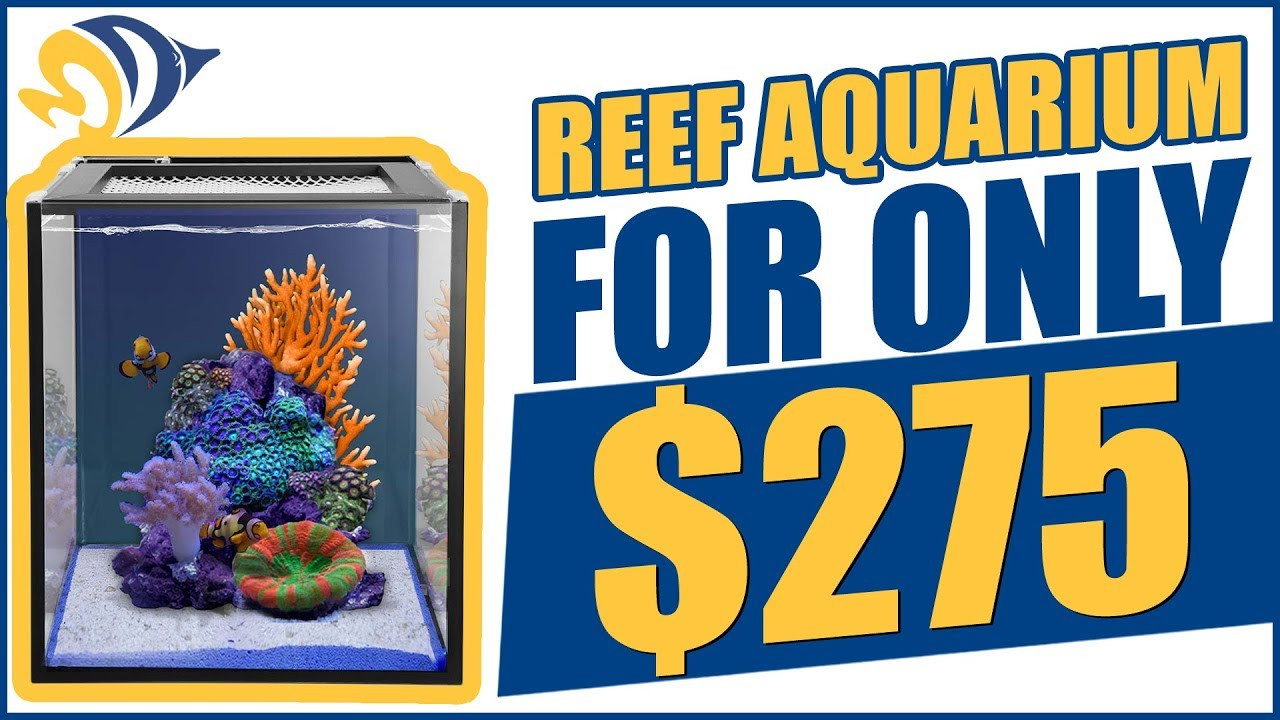 We Built a Reef Aquarium For Only $275. Here's How We Did It! Thumbnail