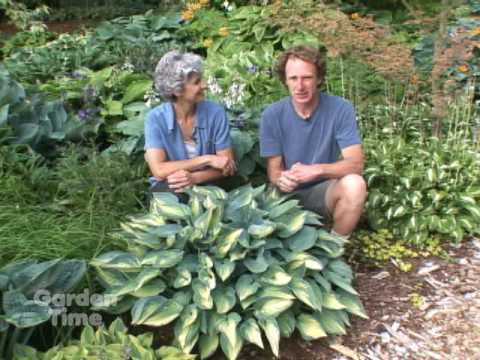 Sun And Shade Hostas Youtube