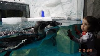 Казанский океанариум/ Что посмотреть в Казани/ Kazan oceanarium/ attractions of Kazan