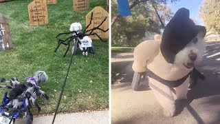 Disabled Dogs Dress Up For Halloween