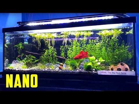 TEENY TINY Ideas For Your Nano Aquarium