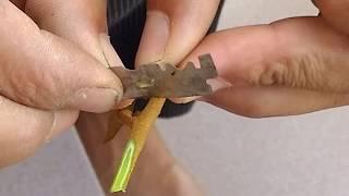 kỹ thuật ghép cây mít, ổi, bơ, sầu riêng bằng 3 phương pháp