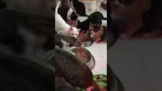 Buona notte dai piccoli della Cat Base