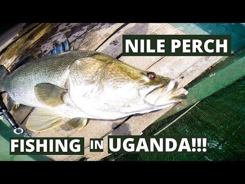 ...Nile Perch Fishing... Trip to Lake Victoria, Uganda 2014