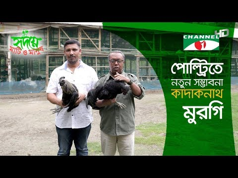 Black bird Kadaknath Shows Hope in Poultry | কাদাকনাথ মুরগি | Shykh Seraj | Channel i |