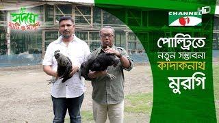 Black bird Kadaknath Shows Hope in Poultry | কাদাকনাথ মুরগি | Shykh Seraj | Channel i |