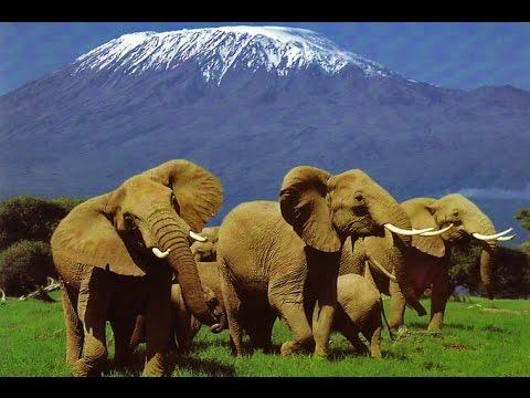Elephants of Kilimanjaro