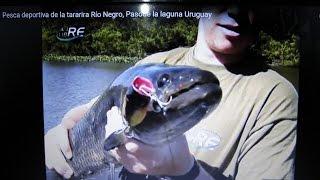 Pesca deportiva de la tararira Río Negro, Pasode la laguna Uruguay